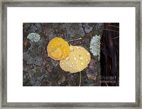Aspen Tears Framed Print