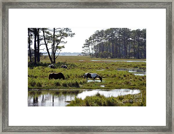 Assateague Wild Horses Feeding Framed Print