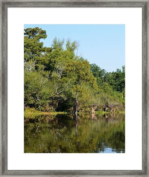 Atchafalaya Basin 7 Framed Print