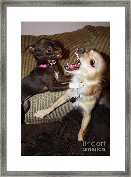 Attack Dogs Framed Print