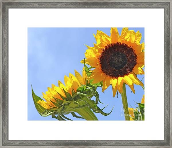 August Sunshine Framed Print