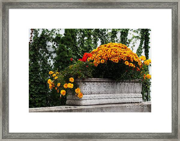 Autum Flowers With Red Accents And Ivy Framed Print by Anne Boyes