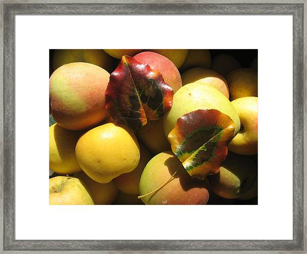 Autumn Apple Afternoon Framed Print