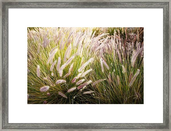 Autumn Breeze Framed Print
