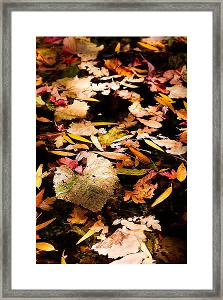 Autumn In Texas Framed Print
