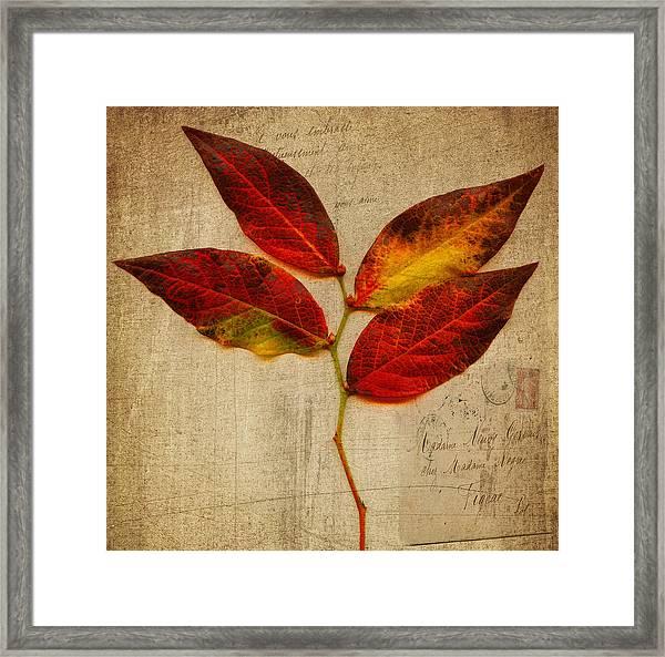 Autumn Leaf With Texture Framed Print