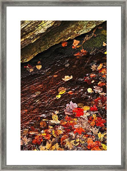 Autumn Leaves In River Framed Print