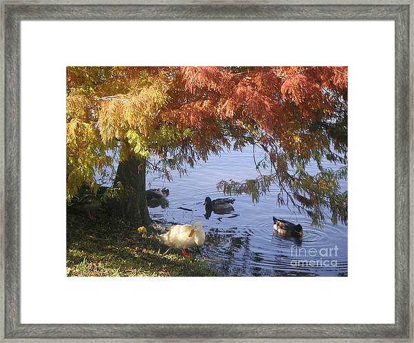 Autumn Peace Framed Print by Lucyna A M Green
