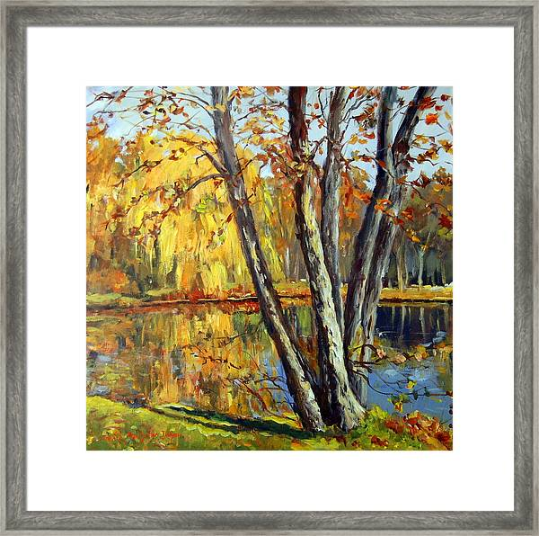 Autumn Sunlight Framed Print