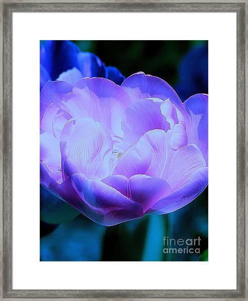 Avatar's Tulip Framed Print