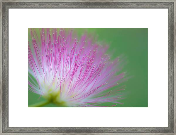 Awesome Blossom Framed Print