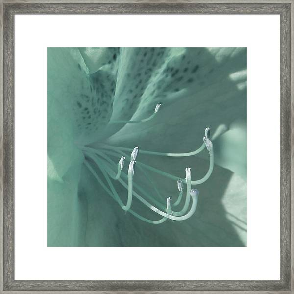 Azalea Hue1 Framed Print