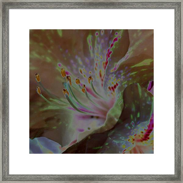Azalea Rock Framed Print