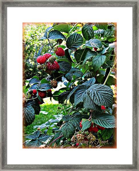 Backyard Berries Framed Print
