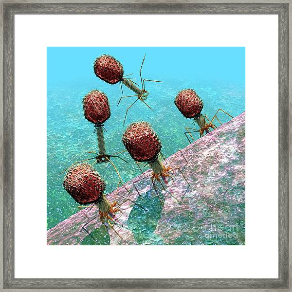 Bacteriophage T4 Virus Group 1 Framed Print