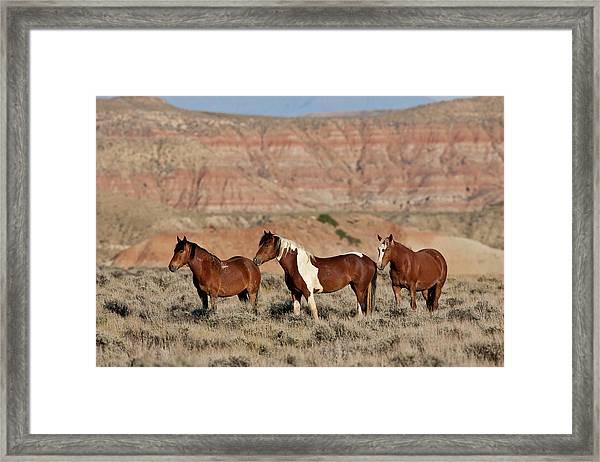 Badland Mustangs Framed Print