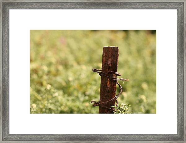 Barbed Wire Green Framed Print