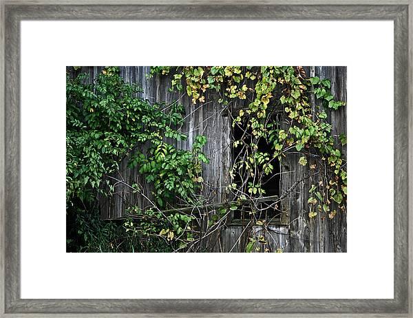 Barn Window Vine Framed Print