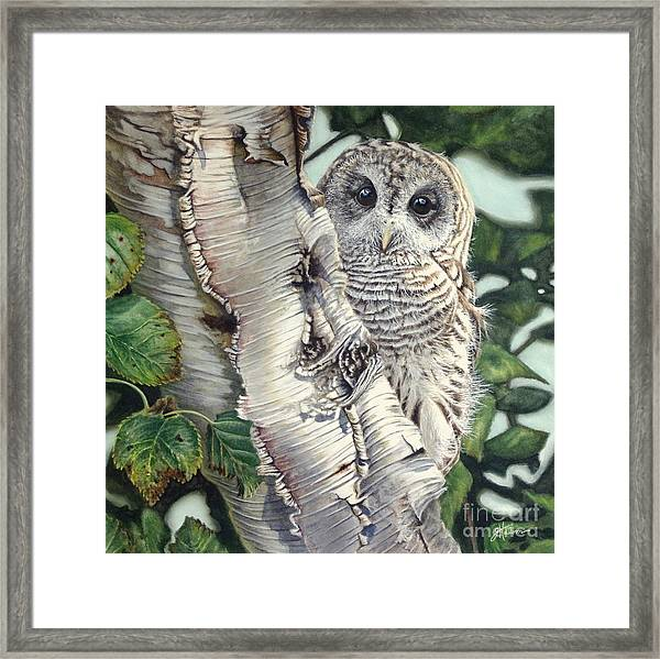 Barred Owl II Framed Print