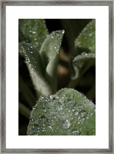 Be Dazzle Framed Print by Jen Baptist