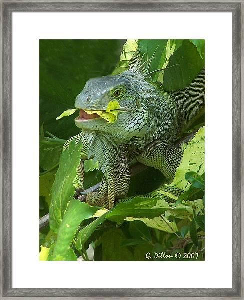 Beautiful Alien Framed Print