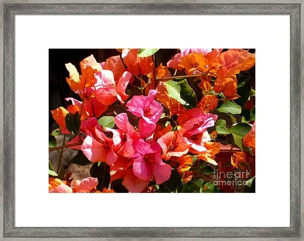 Beautiful Bogies Framed Print