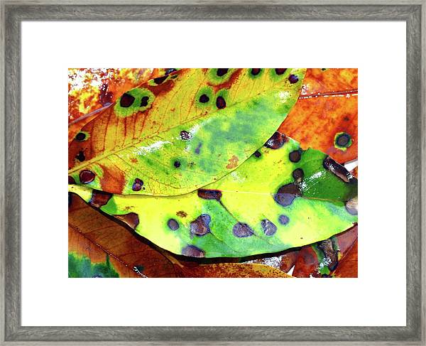 Beauty Of The Change Framed Print