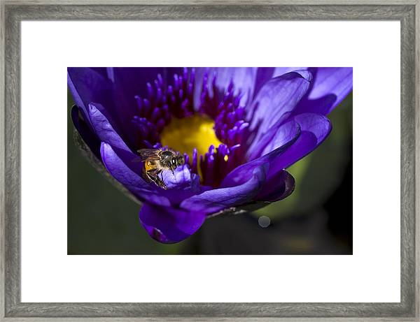 Framed Print featuring the photograph Bee Hug by Priya Ghose
