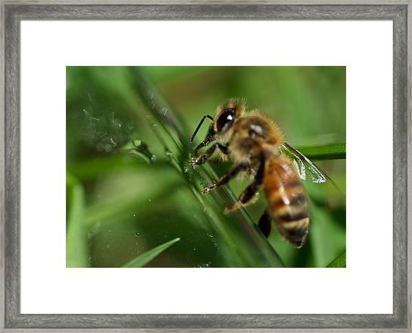Bee In Green Framed Print