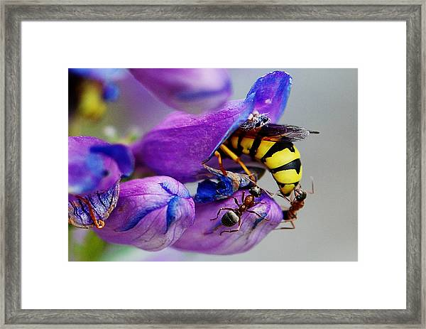 Bee Parking Lot Framed Print
