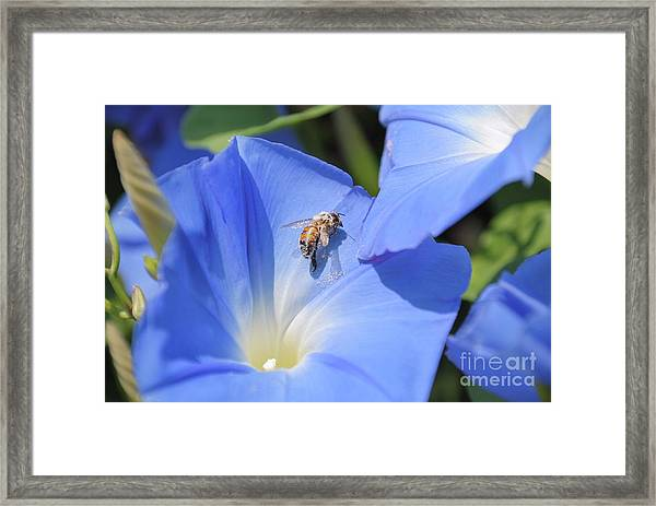 Bee Pollen Framed Print