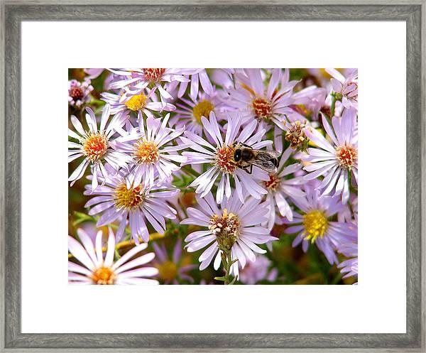 Beeflowers Framed Print