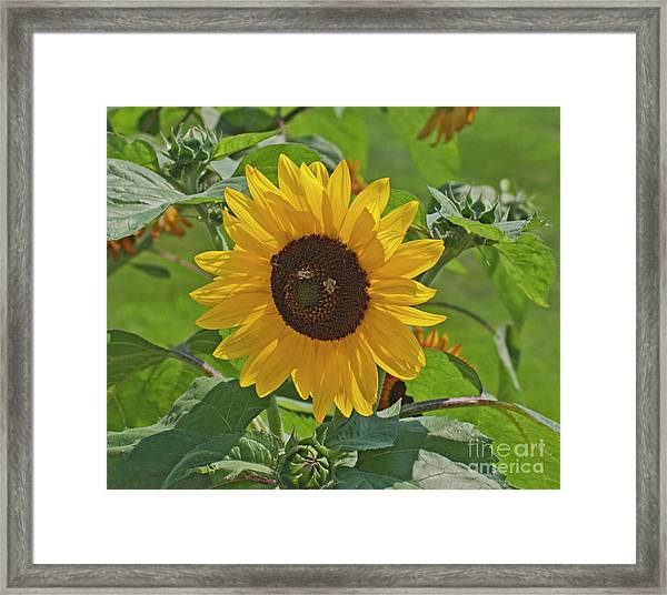 Bees And The Sun Framed Print