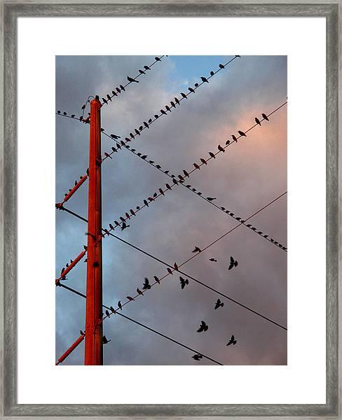 Before Flight Framed Print