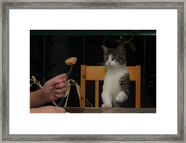 Before The Attack Framed Print