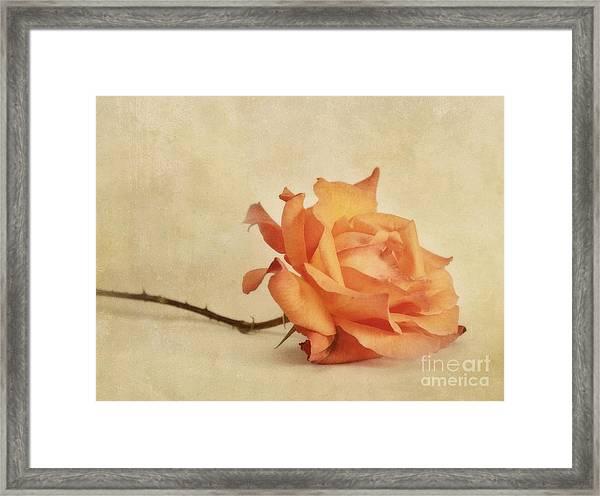 Bellezza Framed Print