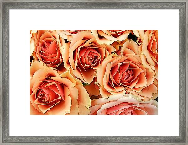 Bergen Roses Framed Print