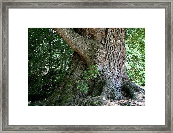 Framed Print featuring the photograph Big Fat Tree Trunk by Lorraine Devon Wilke