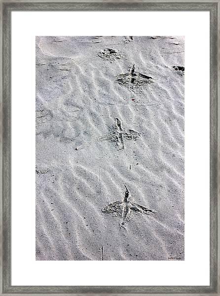 Bird Foot Prints Framed Print