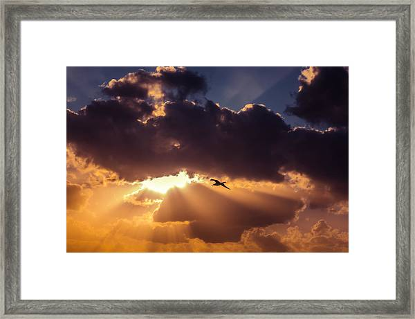 Bird In Sunrise Rays Framed Print