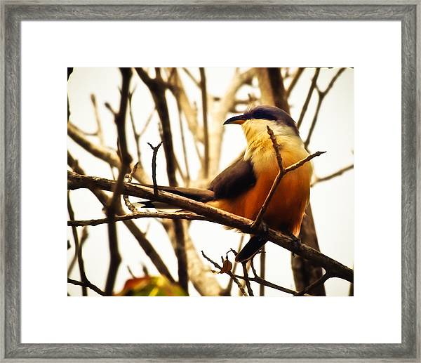 Bird In The Bush Framed Print