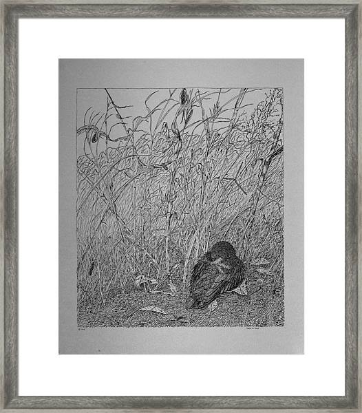 Bird In Winter Framed Print