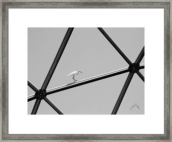 Framed Print featuring the photograph Bird On Structure by Williams-Cairns Photography LLC