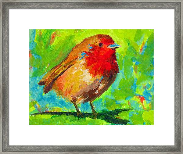 Birdie Bird - Robin Framed Print