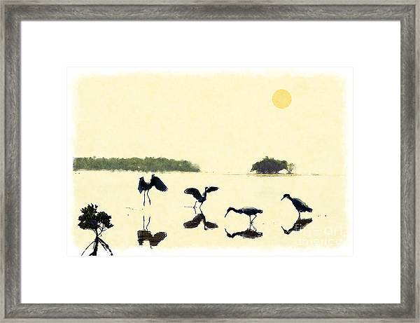 birds feeding in the Everglades Framed Print