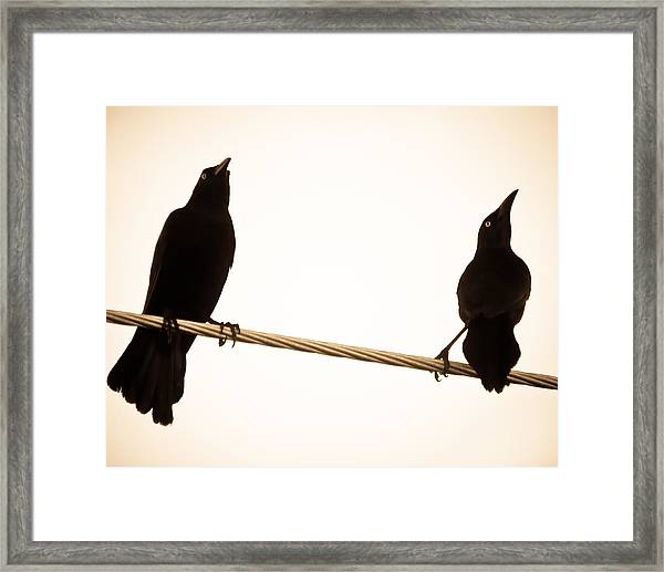 Birds In Black Framed Print
