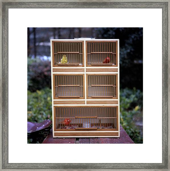 Birds In The Cage Framed Print