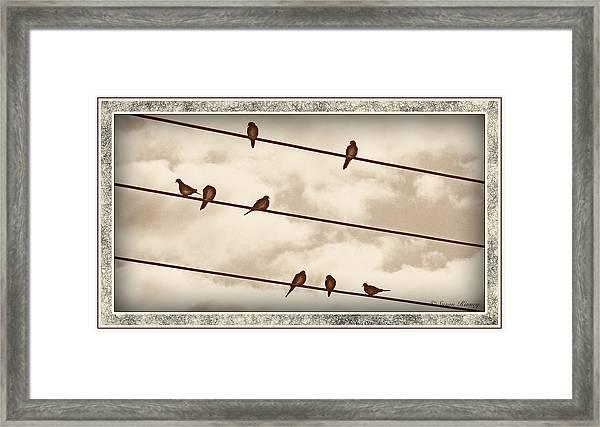 Birds On Wires Framed Print