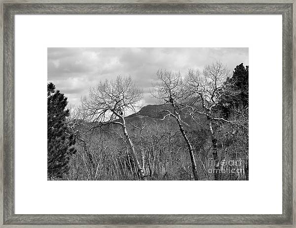 Black And White Aspen Framed Print