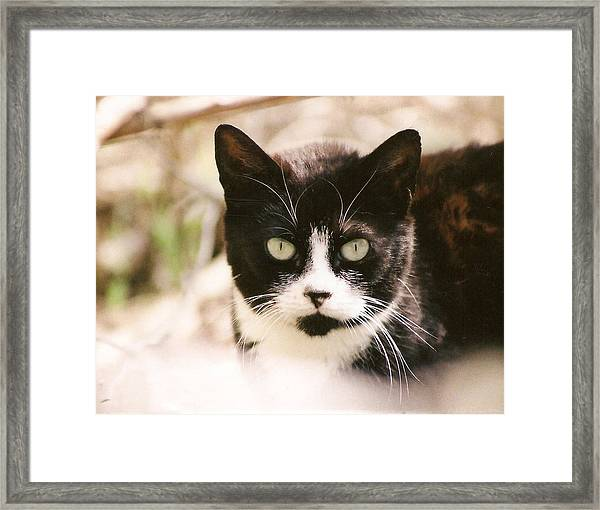 Black And White Feral Cat Framed Print